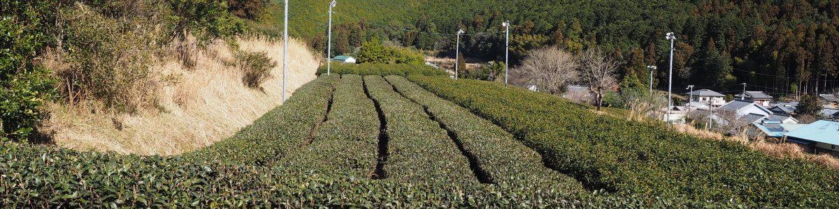 市鹿野 茶畑